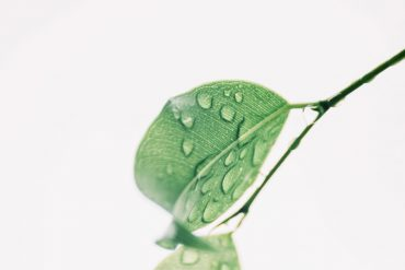 plant-water